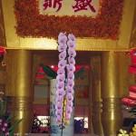 Champion Phal Ming Hsing