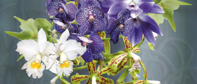 Ausstellung Bern 2020 – «Orchideen treffen Keramik»